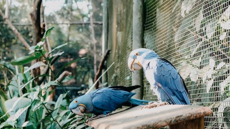 Papageien Parque das Aves
