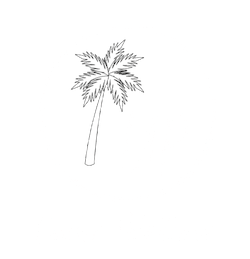 Under Palmtrees